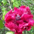 Red flower - Flowers - felting
