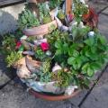 Succulents mountain - For interior - making